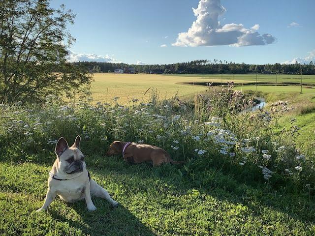Suomalaisen maalaismaiseman karmiva kauneus