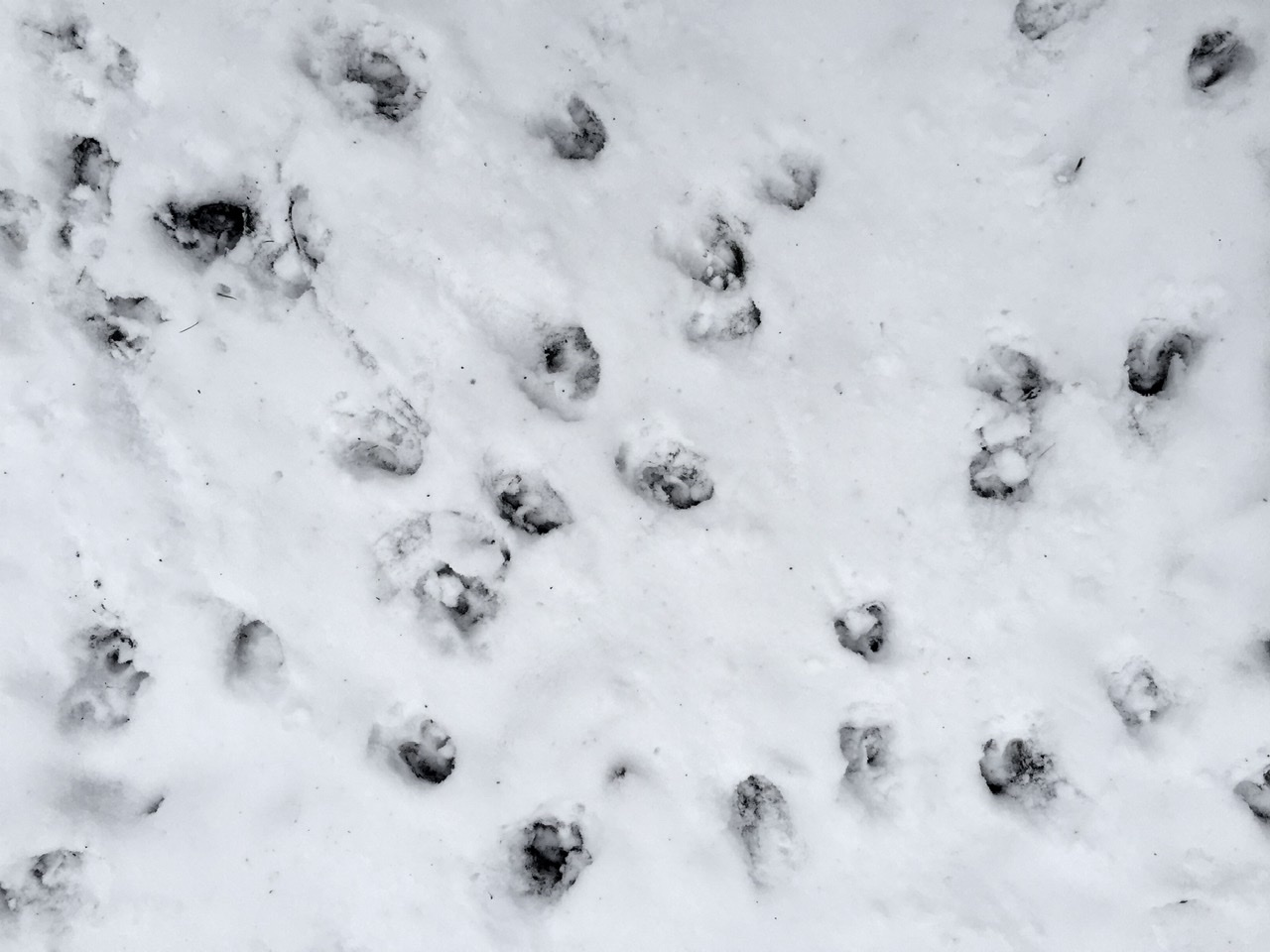 Peuran jälkiä