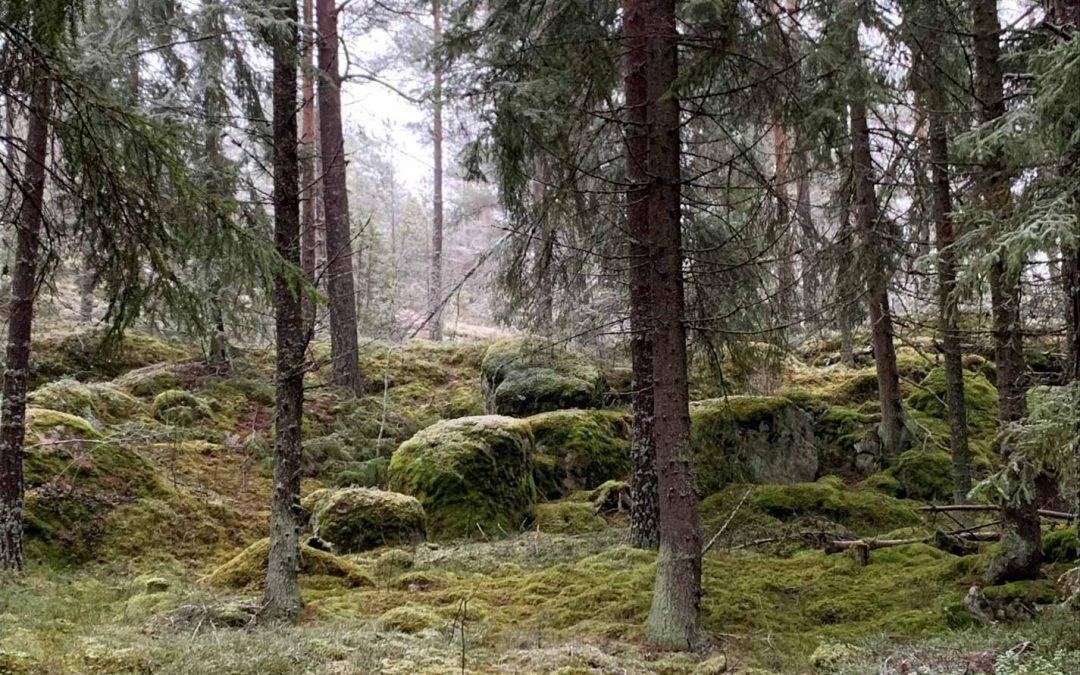 Metsä, eläinten koti